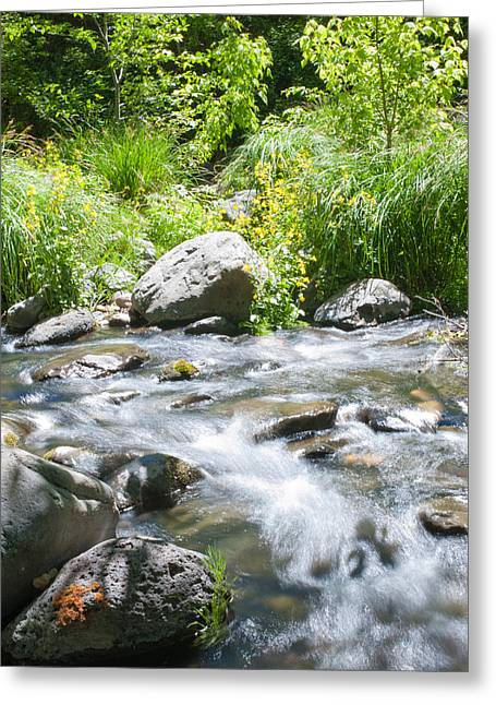 West Fork Greeting Cards - Peacefulness Greeting Card by Shannon Hastings