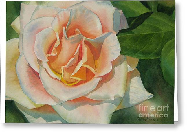 Close Up Paintings Greeting Cards - Peach and Gold Colored Rose Greeting Card by Sharon Freeman