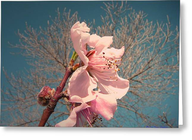 Spacial Greeting Cards - Peach Blossom 2013 Greeting Card by Joyce Dickens