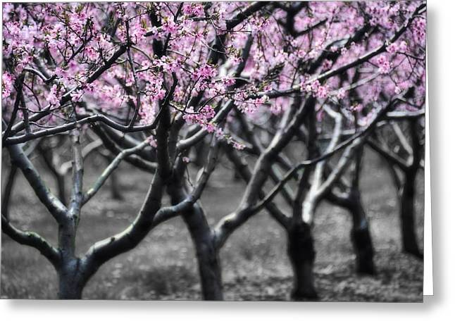 Fruit Tree Art Greeting Cards - Cotton Candy Greeting Card by Henry Kowalski