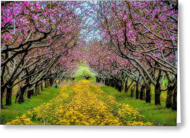 Fruit Tree Art Greeting Cards - Peach Blossoms Dandelion Carpet Greeting Card by Henry Kowalski