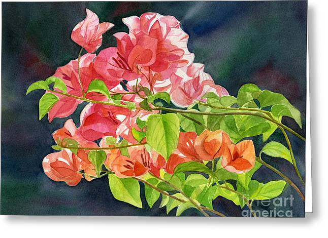 Tropical Gardens Greeting Cards - Peach Colored Bougainvillea with Dark Background Greeting Card by Sharon Freeman