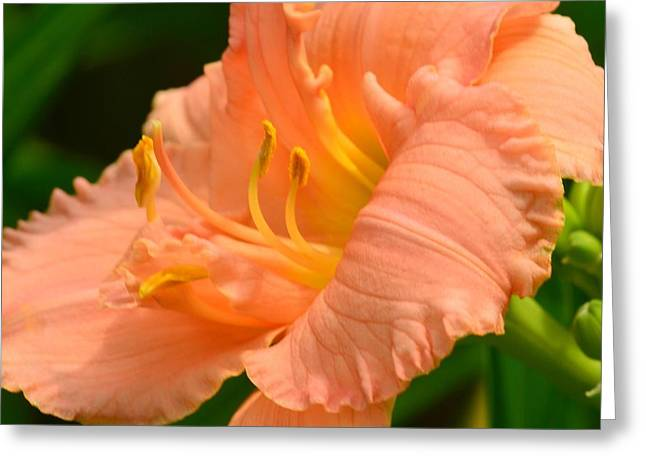 Abstract Digital Photographs Greeting Cards - Peach Day Lilly Greeting Card by Kathleen Struckle