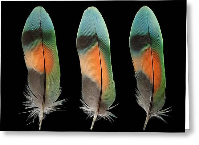 Peach-faced Lovebird Greeting Cards - Peach Face Lovebird Greeting Card by Chris Maynard