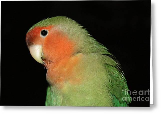 Peach-faced Lovebird Greeting Cards - Peach Faced Lovebird Greeting Card by Terri  Waters