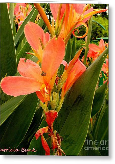 Gladiolas Mixed Media Greeting Cards - Peach Flower Blossoms Greeting Card by Patricia Bunk