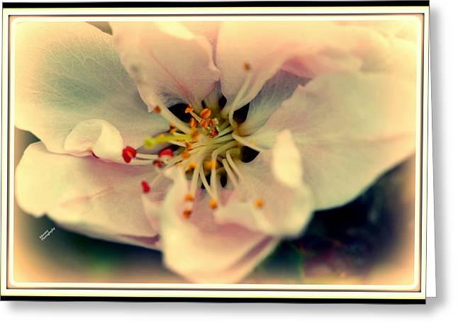 Pestal Greeting Cards - Peach Flower Greeting Card by Karen Kersey