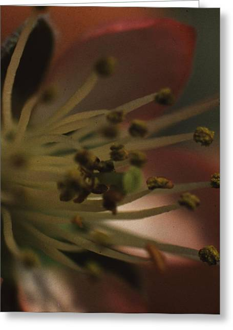 Easter Images Greeting Cards - Peach Flower Greeting Card by Retro Images Archive