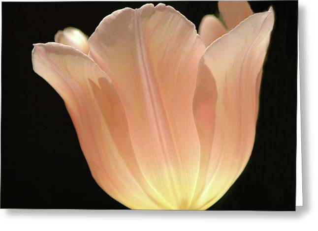 Struckle Greeting Cards - Peach Glow Greeting Card by Kathleen Struckle