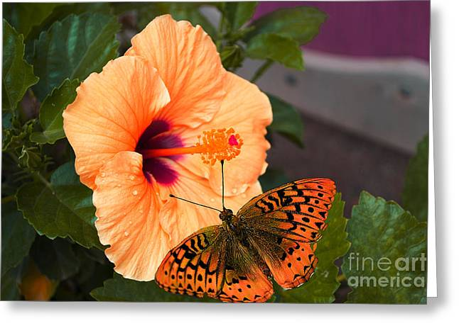 Print Photographs Greeting Cards - Peach Hibiscus Floral Greeting Card by Beverly Guilliams