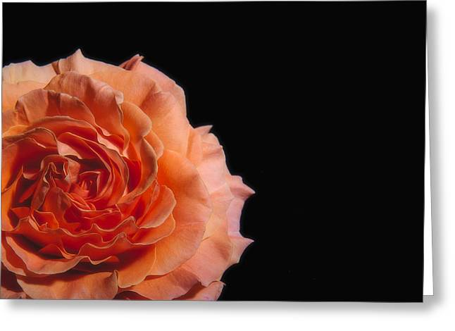 Rotation Greeting Cards - Peach Rose Black Background Greeting Card by Paul W Sharpe Aka Wizard of Wonders