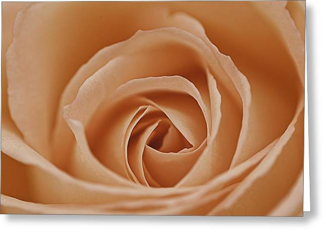 Peaches Photographs Greeting Cards - Peach Rose Greeting Card by Lesley Rigg