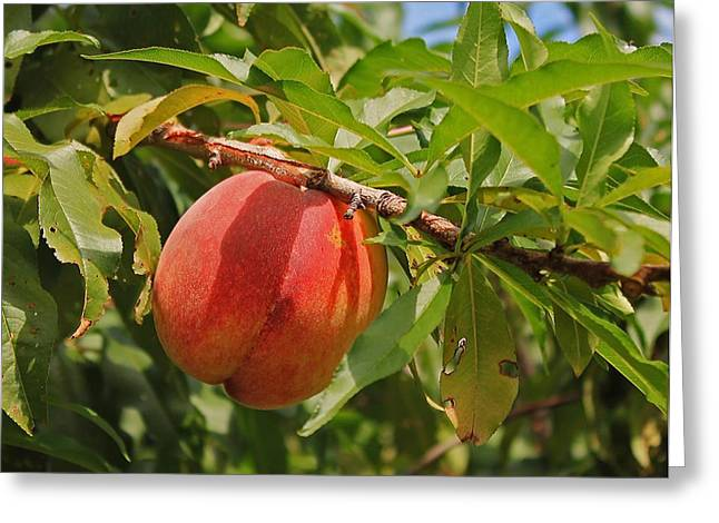 Local Food Greeting Cards - Peach to Pick Greeting Card by Michael Saunders