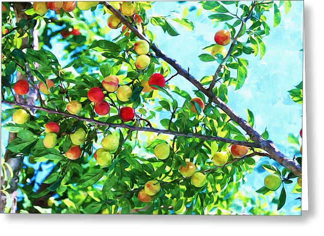 Agronomy Greeting Cards - Peach tree with fruits  Greeting Card by Lanjee Chee