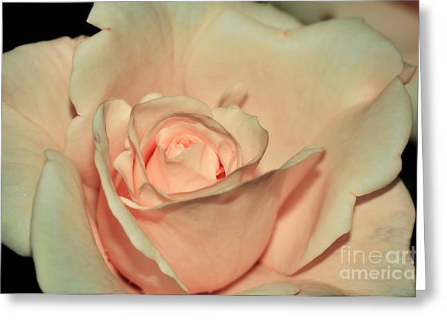 Peaches And Cream Greeting Card by Kaye Menner