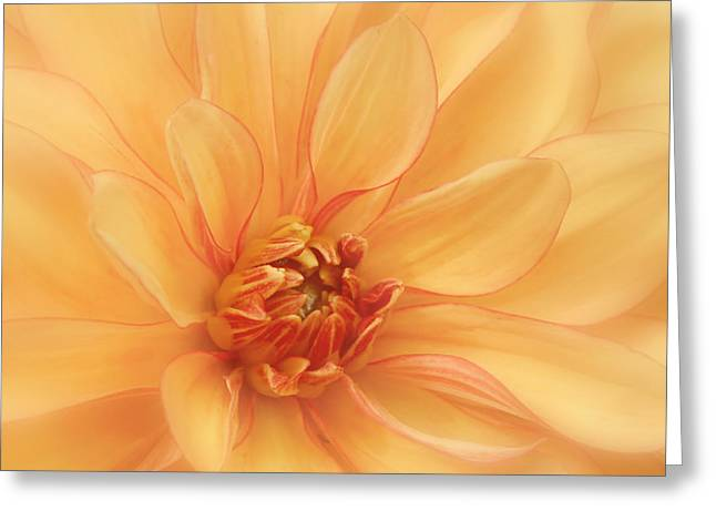 Kim Photographs Greeting Cards - Peaches and Cream Greeting Card by Kim Hojnacki