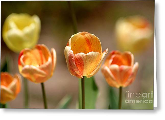 Peaches And Cream Greeting Card by Living Color Photography Lorraine Lynch