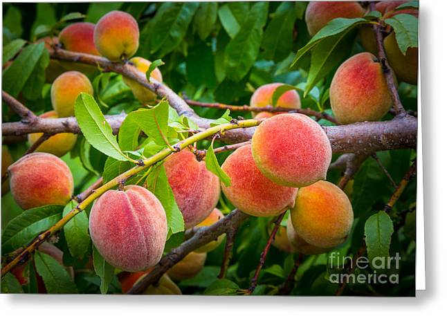Peaches Greeting Card by Inge Johnsson