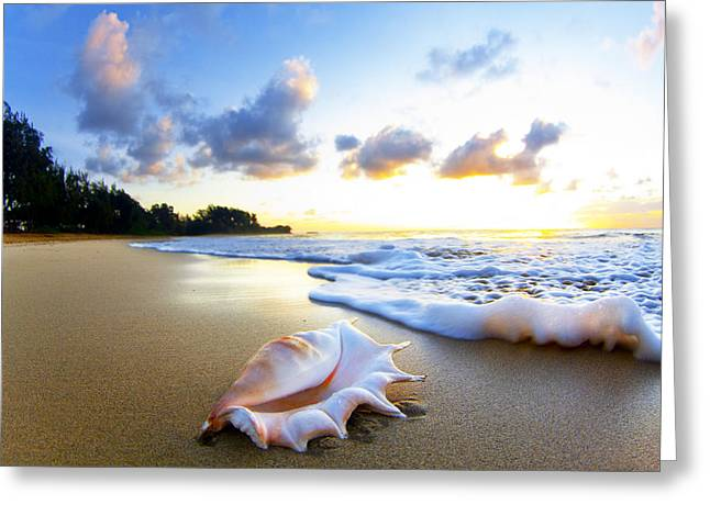 On The Beach Greeting Cards - Peachs n Cream Greeting Card by Sean Davey