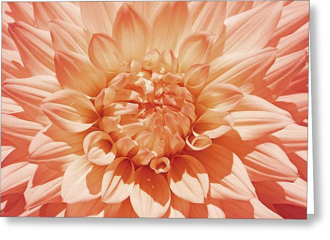Flower Blossom Greeting Cards - Peachy Orange Dahlia Flower Greeting Card by Jennie Marie Schell