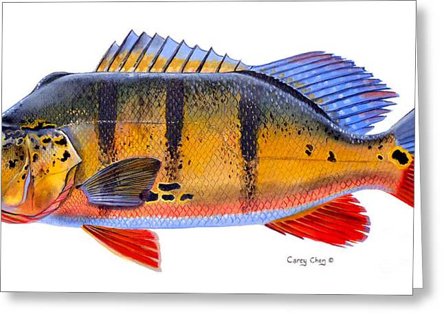 Venezuela Greeting Cards - Peacock Bass Greeting Card by Carey Chen