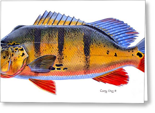 Peacock Bass Greeting Card by Carey Chen