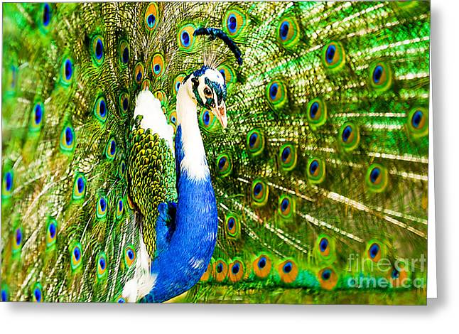 Best Selling Bird Art Greeting Cards - Peacock Beauty Greeting Card by Syed Aqueel