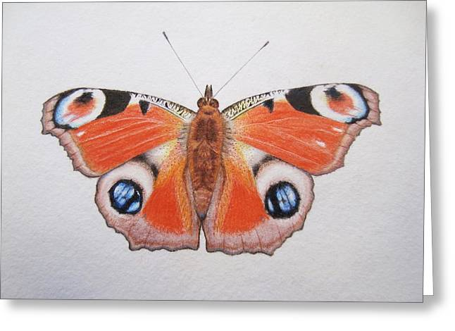Butterflies Drawings Greeting Cards - Peacock Butterfly Greeting Card by Ele Grafton