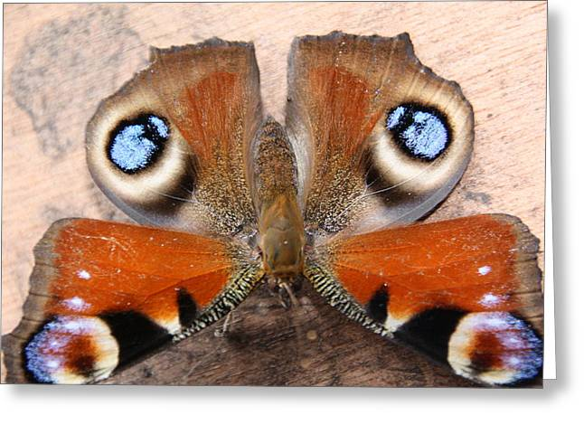 Refuses To See Photographs Greeting Cards - Peacock Butterfly Greeting Card by Liz Bills