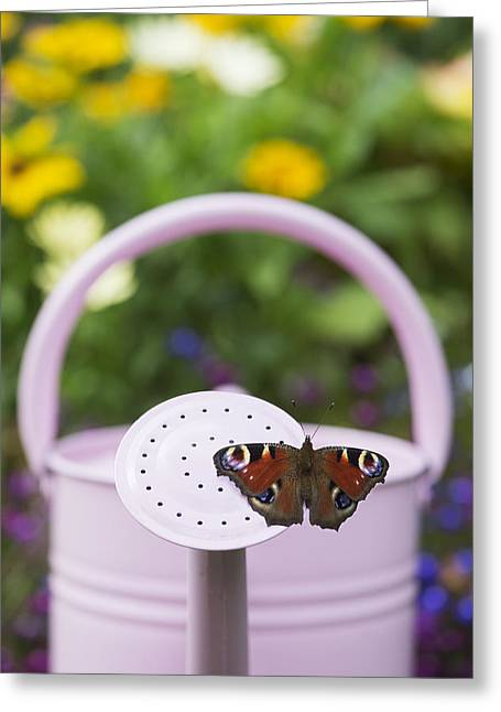 Ios Greeting Cards - Peacock Butterfly Greeting Card by Tim Gainey