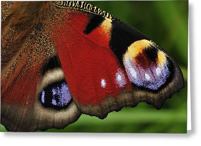 Thomas Marent Greeting Cards - Peacock Butterfly Wing Detail Greeting Card by Thomas Marent