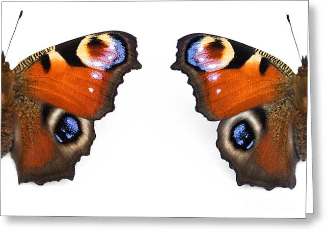 Nymphalidae Greeting Cards - Peacock Butterfly Wings Greeting Card by Tim Gainey