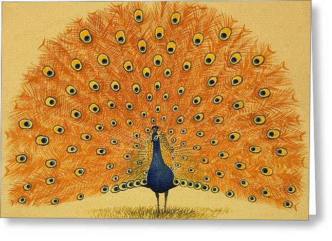 Peacock Greeting Card by English School