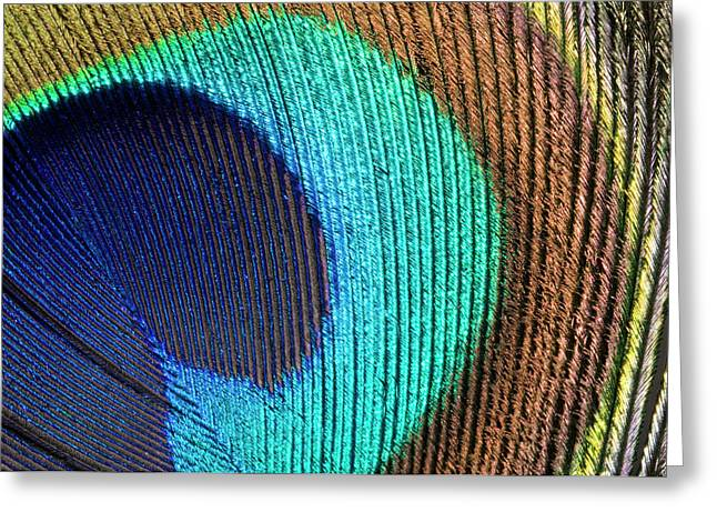 Peacock Feather Abstract Greeting Card by Nigel Downer
