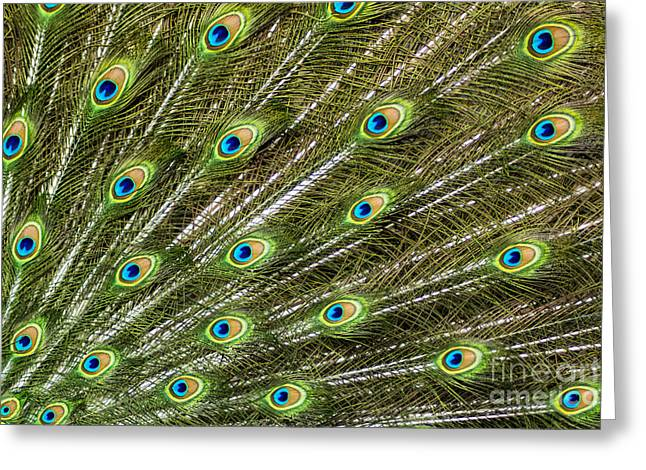 Peacock Feather Abstract Pattern Greeting Card by Darleen Stry