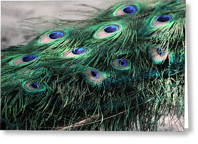 Photographs Digital Art Greeting Cards - Peacock Feathers in Watercolor Greeting Card by Suzanne Gaff
