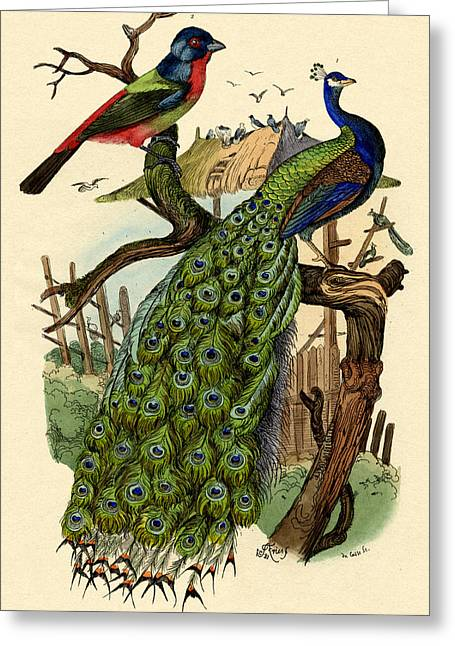 Finch Greeting Cards - Peacock Greeting Card by French School