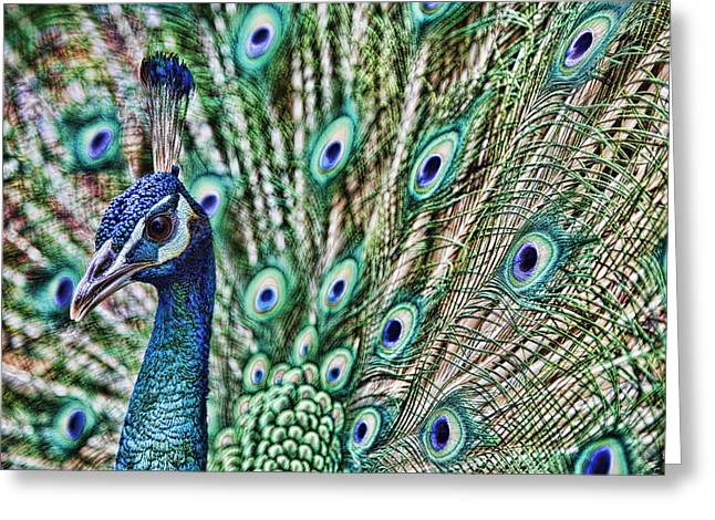 Karen Walzer Greeting Cards - Peacock Greeting Card by Karen Walzer