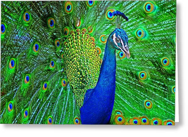 Interference Greeting Cards - Peacock Greeting Card by Nikolyn McDonald