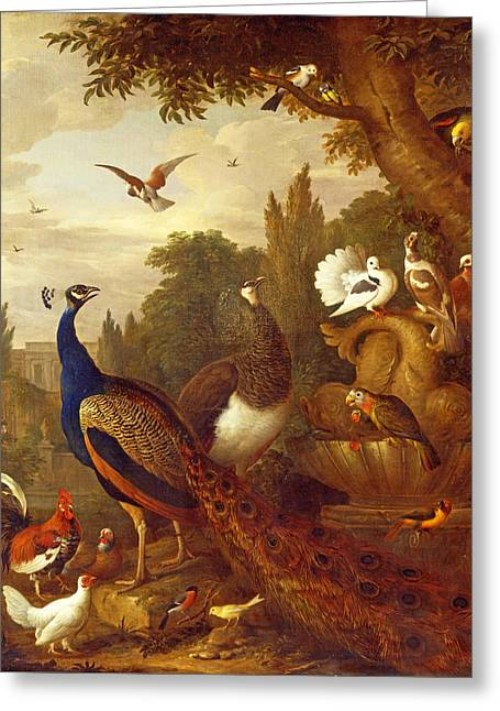 In A Park Greeting Cards - Peacock peahen parrots canary and other birds in a park Greeting Card by Jakob Bogdani