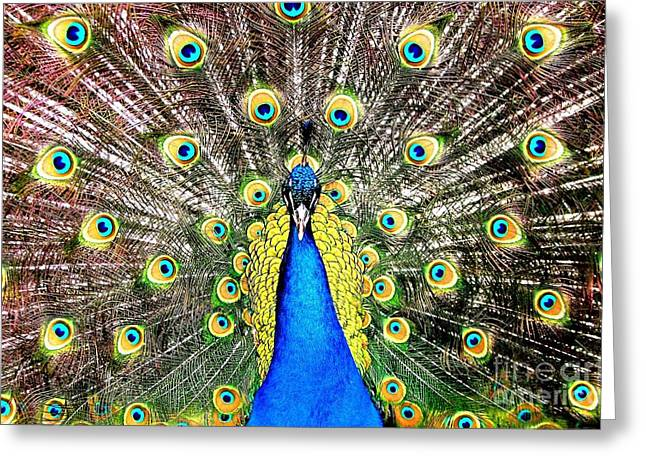 Strut Photographs Greeting Cards - Peacock Greeting Card by Rose Santuci-Sofranko