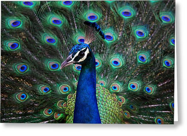 Spreads Greeting Cards - Peacock Greeting Card by Unknown
