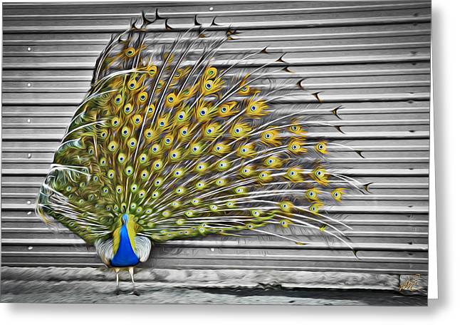 Peacock Greeting Card by Williams-Cairns Photography LLC