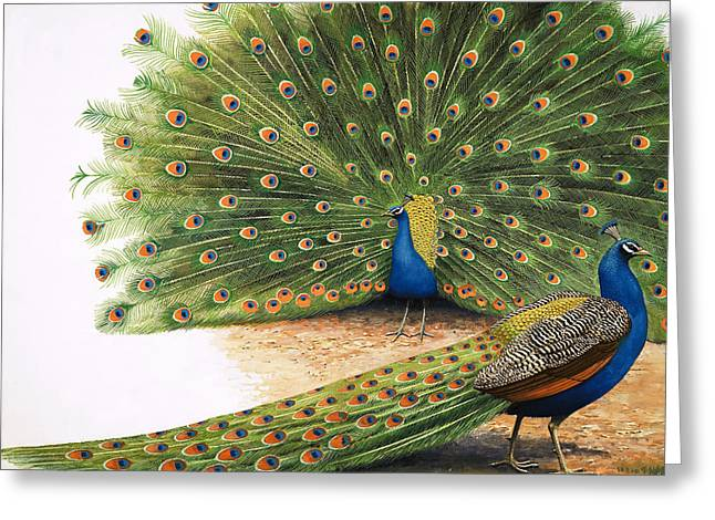 Green And Blue Greeting Cards - Peacocks Greeting Card by RB Davis