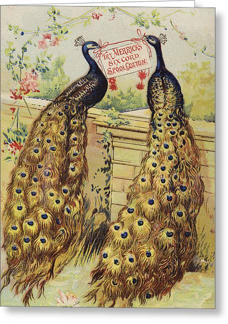 Peafowl Greeting Cards - Peacocks Sitting On Wall Greeting Card by American School