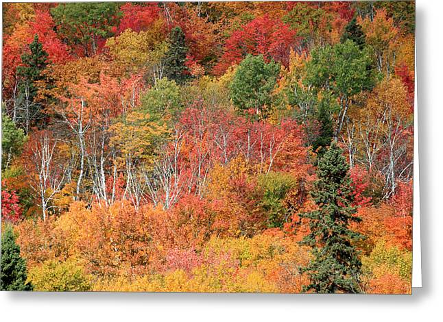 Riviere Greeting Cards - Peak Autumn Colors Greeting Card by Pierre Leclerc Photography
