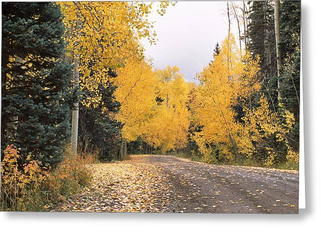 Mountain Road Greeting Cards - Peak Color Greeting Card by Eric Glaser