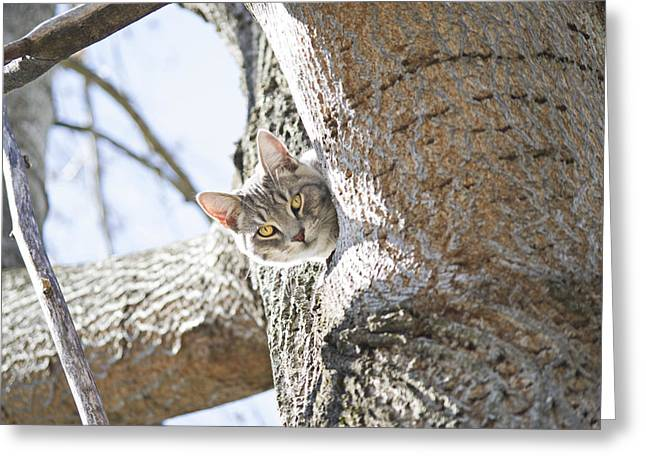 Kitteh Greeting Cards - Peaking Cat Greeting Card by Sharon Popek