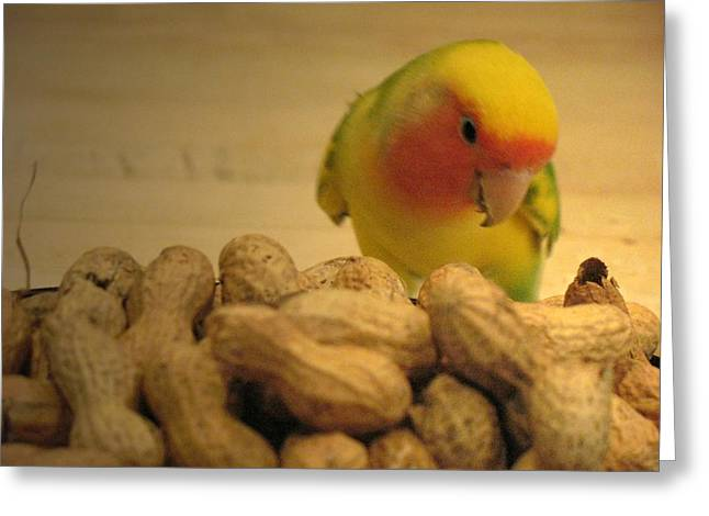 Peach-faced Lovebird Greeting Cards - Peanut  Greeting Card by  Andrea Lazar