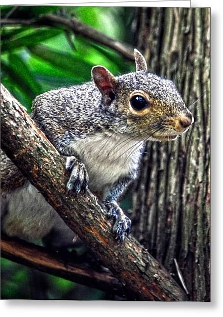 Peanut? Treat? Greeting Card by Sandi OReilly